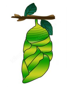Butterfly Cocoon Clipart 02